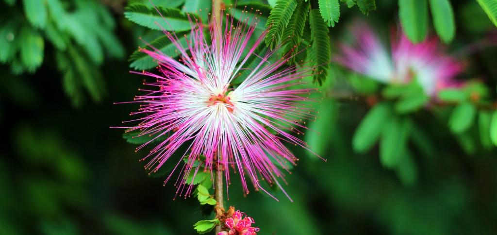 Uthpala Shyamendra 2photo-1458280877781-0e7c855810b4